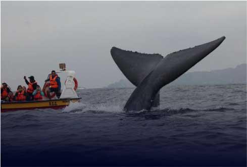 cov-ballenas